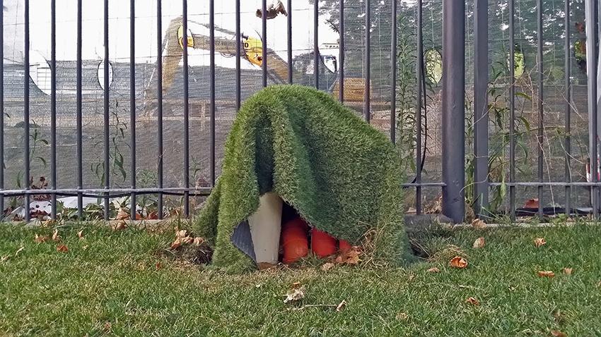 08-tappeto-verde